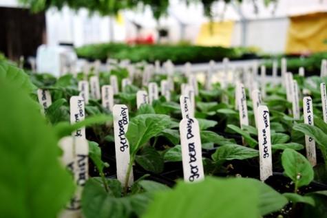 NFHS Plant Sale