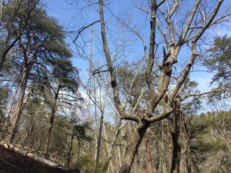 Sawnee Mountain Preserve Opens New Hiking Trails