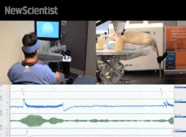 A human hooked up to an electrode cap that monitored their brain activity using electroencephalography (EEG) moves a rat's tail using specialized technology.