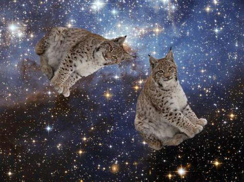Lynxes are not supposed to be in space. However, these two lynxes have decided to defy conventional laws of nature.