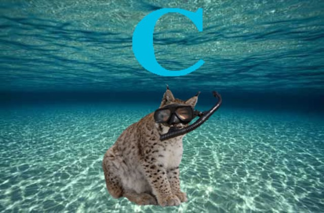 "Some lynxes take things far too literally. In an effort to raise awareness for the sea and lynxes, this particular lynx has taken the initiative to become a rare snorkeling lynx exploring under a ""c."""