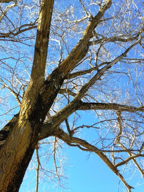 the oak he becomes/with roots as toes/and sprouts as thumbs