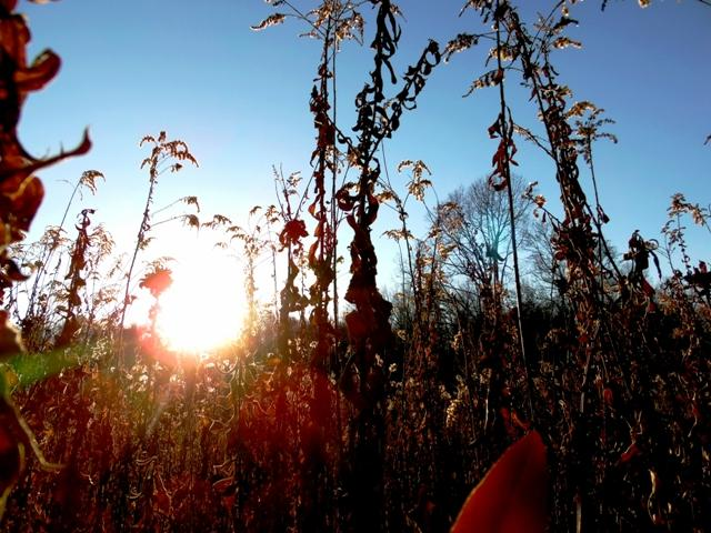 The sun sets amidst the azure sky. Honey colored wheat prospered in the clearing at the center of the woods. This area served as a resting place and to catch one's breath.