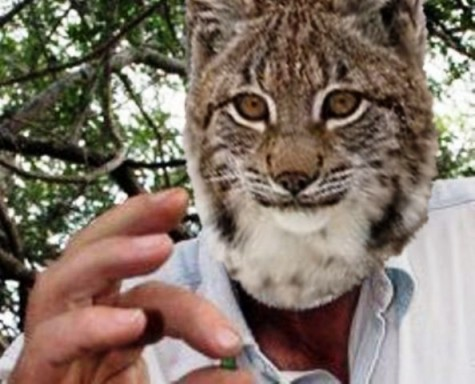 "Dr. Lynx, who has previously debuted on the Friday Lynx as a doctorate lynx of great experience, intensively inspects a glorious specimen of rock he uncovered in the field. ""Meow,"" he says, when asked about the quality of the geologic marvel."