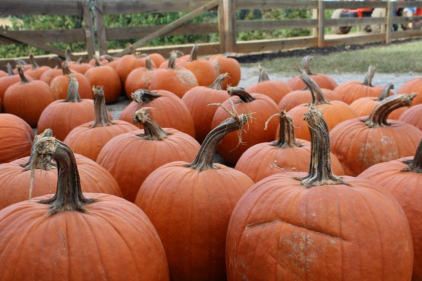 Here, you can learn the top five things to do, books, costumes and movies! These pumpkins at Kinsey's Family Farm capture an essence of how fun Halloween is.