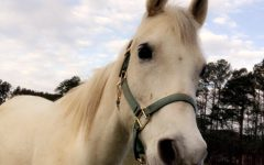 Horse Lovers Rejoice: Equestrian Team Is Back At NFHS