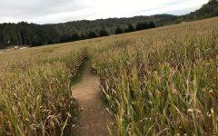 Top Two Corn Mazes in Georgia