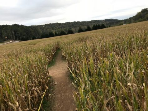 Top Two Corn Mazes in Georgia