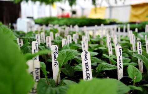 NFHS Booming Agricultural Program