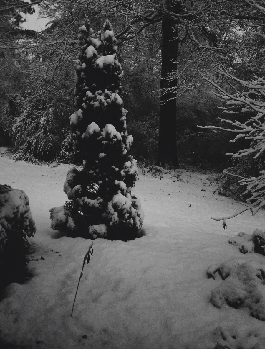 I am from shivering cold winters,where the snowmen towered over me and the conifers grazed the sky.